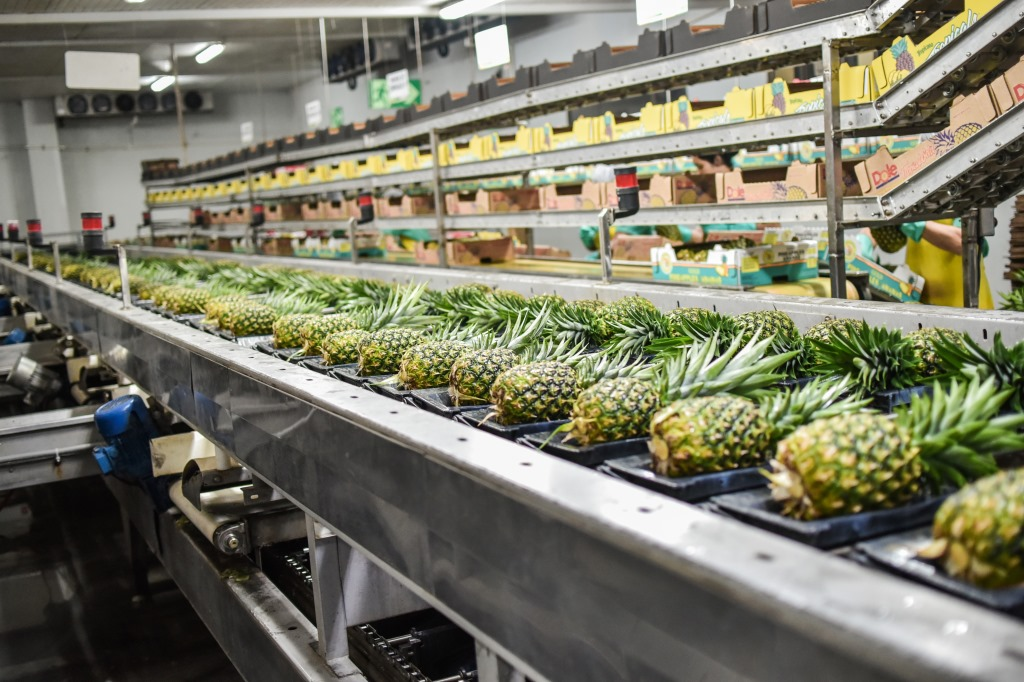 Pineapple plantation Costa Rica