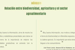 Web-Seminar zu Biodiversität im Anbau von Bananen und Ananas